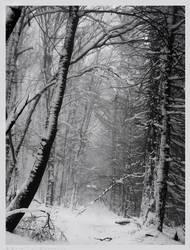 Snow Covered Darkness by Spiritofdarkness