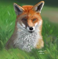 Fox by niveky