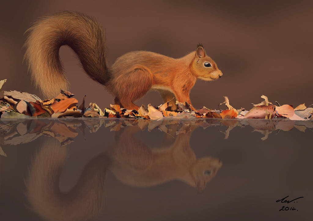 Squirrel by niveky