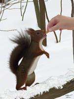 Feeding the squirrel by niveky