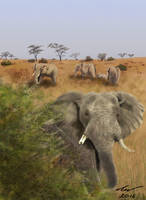 African Elephants by niveky