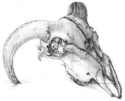 Skull by kaecee