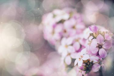 Happy Spring Season 2 by Wings-of-Light