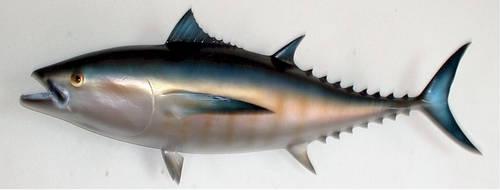 Bluefin Tuna 01 by Markhal
