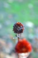buds by dizzia