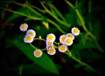 Dainty by 9RockPhotography