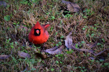 Angry Bird by 9RockPhotography