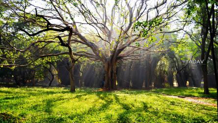 Morning Rays 1920x1080 by YadavThyagaraj
