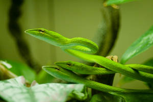 Snakes are the Grass by robert-kim-karen