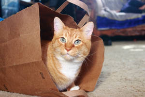 A Cat and a Bag by robert-kim-karen