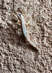 Gecko-Night by NativeStew