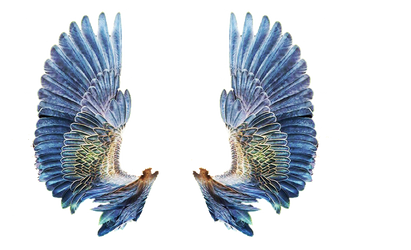 wing set by mysticmorning