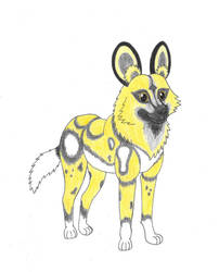African Wild Dog by kiinastar