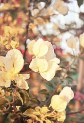 Golden Petals by Zayoon