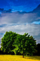 trees under the open sky by 89-RAW-89