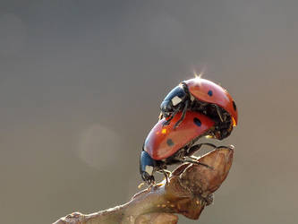 Ladybugs by benas1971