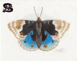 Blue Pansy - Pencil Art by sammacha