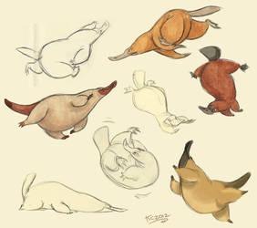 Platypus sketches by Polarkeet