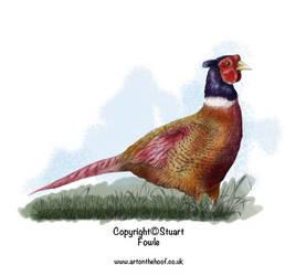 Pheasant by cpart