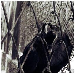 Raven by xinkedboyx