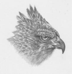 Griffin Head by troxell