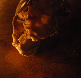 Skull 2 by terezarsm