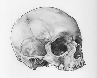 Skull by Ch4r