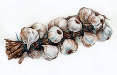 Garlic watercolor by Ch4r