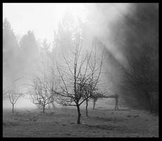 Meet Me In The Orchard by rrbushey