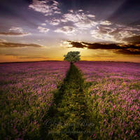 Dreamscape by ZanaSoul