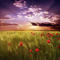 A beautiful day.. by ZanaSoul