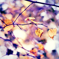 Brighter Days. by ZanaSoul