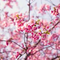 Spring dreams. by ZanaSoul