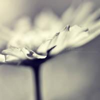into the light by ZanaSoul