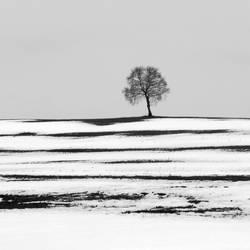 winter2012 by ernesto1de