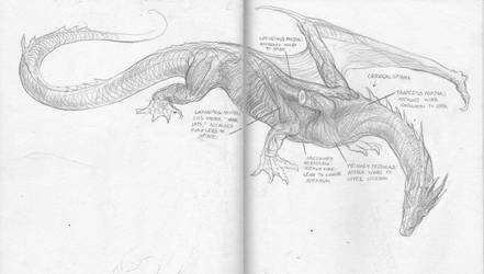Smaug anatomical study by TurnerMohan