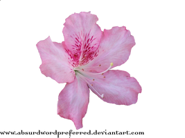 Transparent Flower PNG by AbsurdWordPreferred