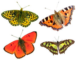 Butterflies4 png by AbsurdWordPreferred