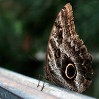 Beautiful Butterfly by Midnight-Cardinal