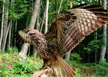 Horus the falcon god by zazoon