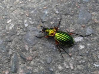 Speedy bug by BlueFox-cz