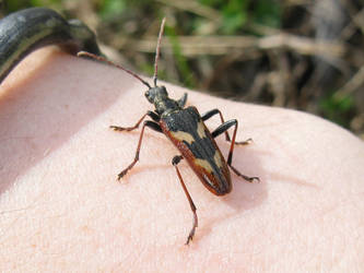 friendly bug by BlueFox-cz