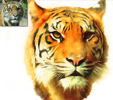 GIMP Watercolor Imitation -Tiger- by Chrisdesign