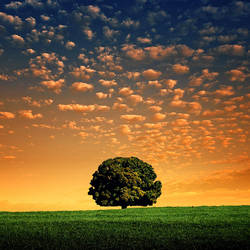 Lonely Tree III by IsacGoulart