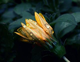 a flower by SOOO