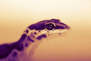 beautiful creature by SOOO