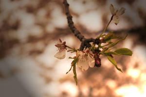 Seasons Fading by iulli