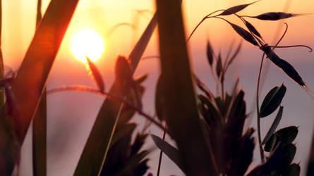 the sun's guna save me. by iulli