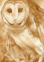 Barn Owl by Calmality