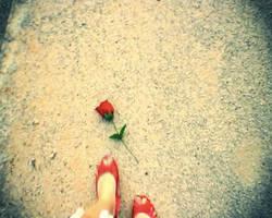 Fallen Rose by kawaiwawi